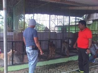 Anjing Herder Bogor Kita Com
