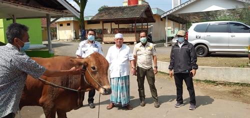 Camat Tenjo Kurnia Indra, saat menyerahkan satu ekor sapi sebagai hewan kurban dari Bupati Bogor untuk Ketua MUI Kecamatan Tenjo.