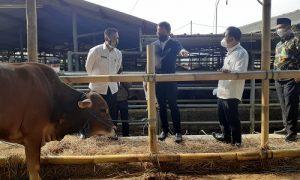 Walikota Bogor Bima Arya tinjau UPTD RPH di Bubulak